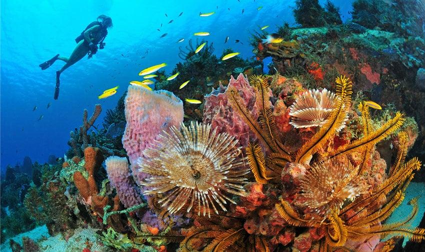 Francés y scuba diving en La Martinica